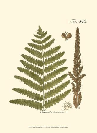 Small Antique Fern VI