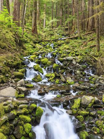 https://imgc.allpostersimages.com/img/posters/small-creek-with-waterfall-olympic-national-park-washington-usa_u-L-PHATQO0.jpg?p=0