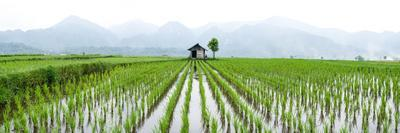 https://imgc.allpostersimages.com/img/posters/small-hut-in-the-middle-of-padi-field-in-sumatra-indonesia-southeast-asia_u-L-Q12SD770.jpg?p=0
