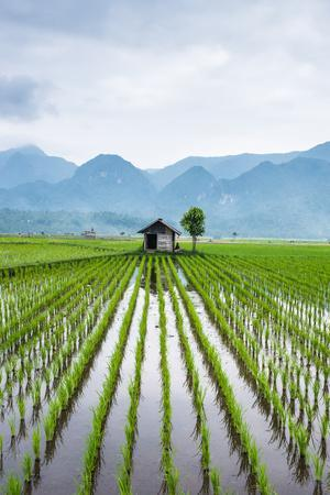 https://imgc.allpostersimages.com/img/posters/small-hut-in-the-middle-of-padi-field-in-sumatra-indonesia-southeast-asia_u-L-Q12SDC00.jpg?p=0