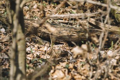https://imgc.allpostersimages.com/img/posters/small-mouse-hides-itself-in-the-forest-between-the-dry-foliage_u-L-Q1EXMYW0.jpg?artPerspective=n