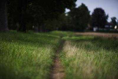 https://imgc.allpostersimages.com/img/posters/small-path-through-a-meadow_u-L-Q1EXVEQ0.jpg?artPerspective=n