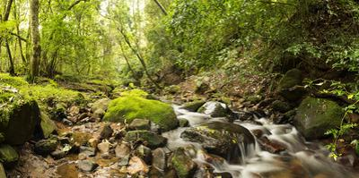Small stream flowing through a densely covered forest in the Magoebaskloof, Tzaneen, Limpopo Pro...
