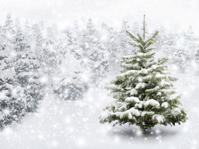 Fir Tree in Thick Snow by Smileus