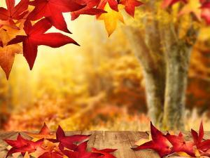 Scenic Autumnal View by Smileus