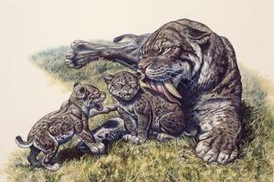 Smilodon Sabertooth Mother and Her Cubs