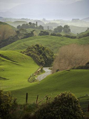 Rangiwahia Road, Winding Through Sheep Pasture in Rural Manawatu, North Island, New Zealand
