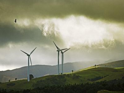 Wind Turbines and Soaring Bird of Prey, Ruahine Ranges, Manawatu, North Island, New Zealand