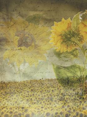 Dear Sunflower Field by Smith Haynes