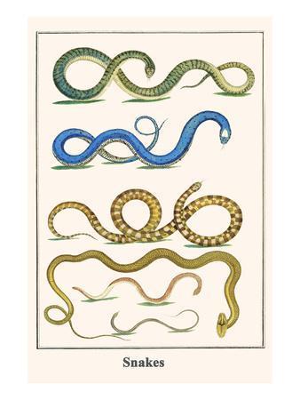 https://imgc.allpostersimages.com/img/posters/snakes_u-L-PGGU980.jpg?artPerspective=n