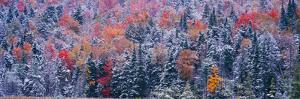 Snow and Autumn Trees, Adirondack Mountains, New York State