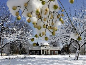 Snow Clings to Branches of a Berry Tree on the South Lawn of Thomas Jefferson's Home