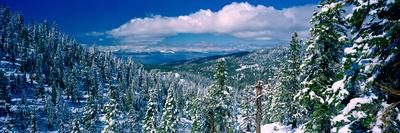 https://imgc.allpostersimages.com/img/posters/snow-covered-pine-trees-in-a-forest-with-a-lake-in-the-background-lake-tahoe-california-usa_u-L-PSNC6C0.jpg?p=0