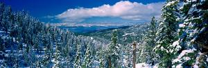 Snow Covered Pine Trees in a Forest with a Lake in the Background, Lake Tahoe, California, USA