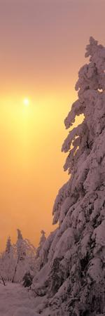 https://imgc.allpostersimages.com/img/posters/snow-covered-tree-in-winter-at-sunset-feldberg-mountain-black-forest-baden-wurttemberg-germany_u-L-PSNQMV0.jpg?p=0