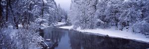 Snow Covered Trees Along a River, Yosemite National Park, California, USA