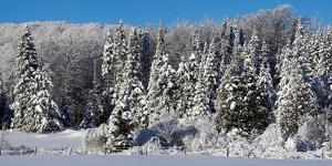 Snow covered trees, Brome Lake, Quebec, Canada