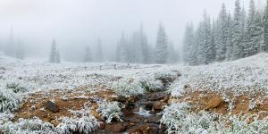 Snow covered trees in Hidden Valley along, Trail Ridge Road, Estes Park, Rocky Mountain National...