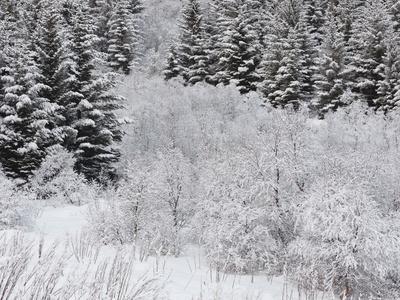 https://imgc.allpostersimages.com/img/posters/snow-covered-wood-austvagoya-island-lofoten-nordland-county-norway_u-L-Q11YT9U0.jpg?p=0