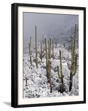 Snow Covers Desert Vegetation at the Entrance to the Santa Catalina Mountains in Tucson, Arizona
