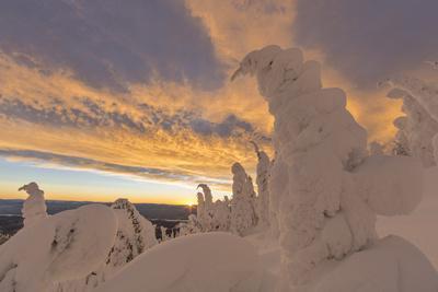 https://imgc.allpostersimages.com/img/posters/snow-ghosts-in-the-whitefish-range-montana-usa_u-L-PN6M8B0.jpg?p=0