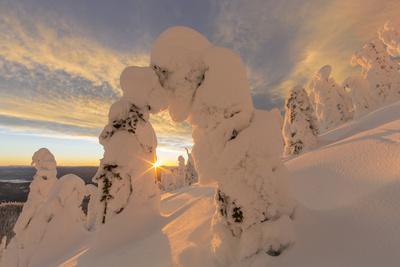 https://imgc.allpostersimages.com/img/posters/snow-ghosts-in-the-whitefish-range-montana-usa_u-L-PXR79X0.jpg?p=0