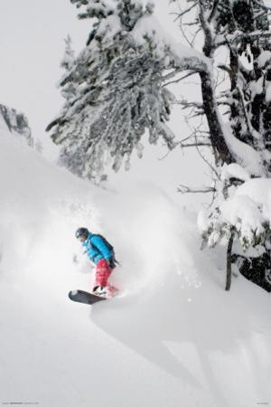 Snowboarder-Under Tree
