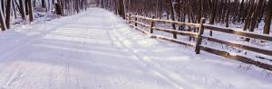 Snowcapped Road and Fence in the Forest, Grand Rapids, Michigan, USA