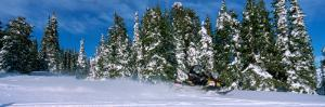 Snowmobiling in Yellowstone National Forest, CA