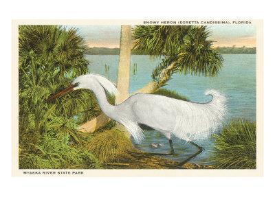 https://imgc.allpostersimages.com/img/posters/snowy-egret-myakka-river-state-park-florida_u-L-P7C5WK0.jpg?p=0