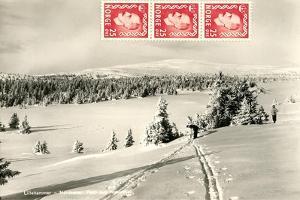 Snowy Norwegian Hillside