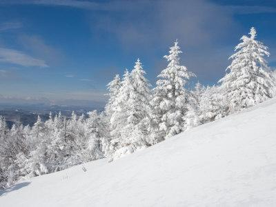 https://imgc.allpostersimages.com/img/posters/snowy-trees-on-the-slopes-of-mount-cardigan-canaan-new-hampshire-usa_u-L-P49V1B0.jpg?p=0