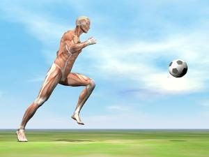 Soccer Player Musculature Running after Soccer Ball