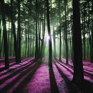 Technicolor Trees 1 by Soderberg