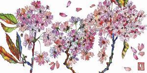 Cherry Blossom by Sofia Perina-Miller
