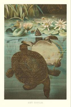 Soft Turtles