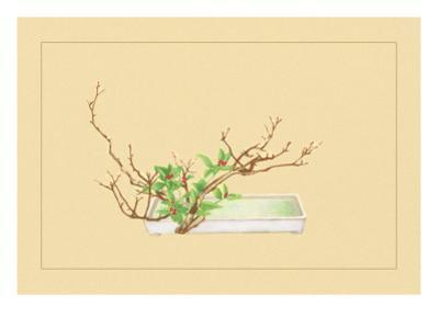 Plum and Chloranthus Brachystchys