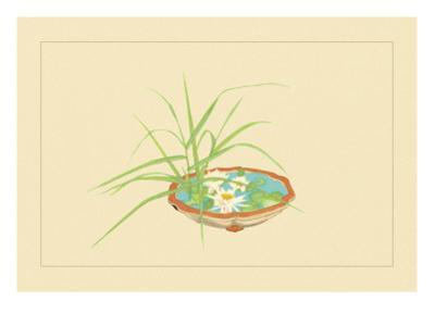 Reed and Pond Lily