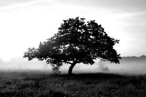 Solemn Tree