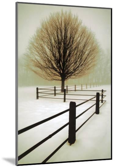 Solitude-David Winston-Mounted Print