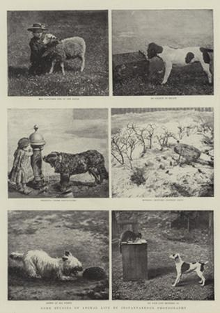 Some Studies of Animal Life by Instantaneous Photography