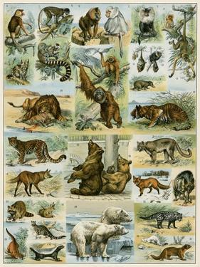 Some Wild Animals of the World