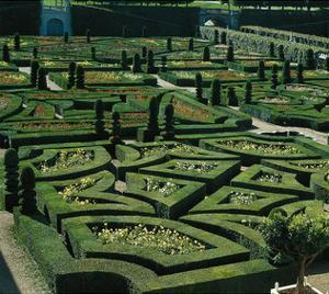 Somptuous Garden III