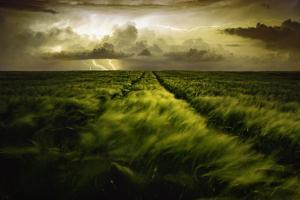 Journey to the Fierce Storm by Sona Buchelova