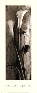 Driftwood Lilies by Sondra Wampler