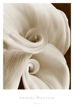 Fleur No. 1 by Sondra Wampler