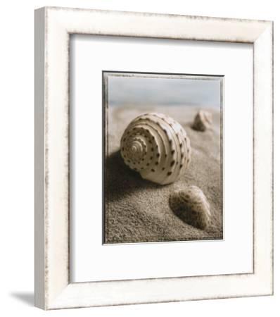 Seashell I by Sondra Wampler