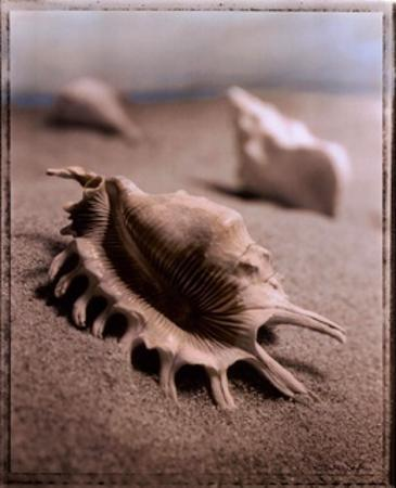 Seashell III by Sondra Wampler