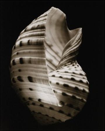Tonna (small) by Sondra Wampler