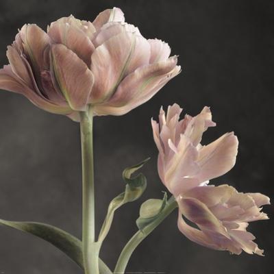 Tulip II by Sondra Wampler